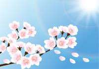 Cherry-blossom-wallpaper-photoshop-backgrounds