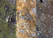 Lichen Texturas