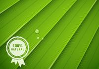 Texture de la feuille verte psd