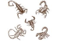 Hand-drawn-scorpions-brushes