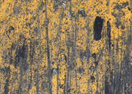 Yellow-wall-texture