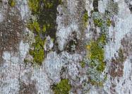 Texture de l'écorce d'arbre