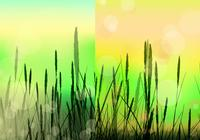 Bokeh Reed Background PSD Pack