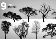 9 pinceles de árbol de alta resolución