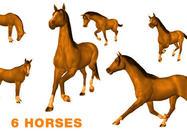 6 hästborstar