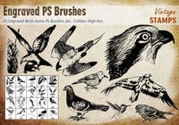Grabados de aves PS Brushes