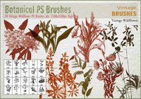 20_vintage_wildflower_ps_brushes_abr_preview