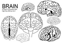 20 Brain PS Brushes ABR. Vol.1