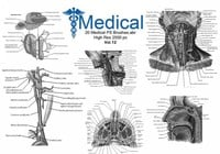 20 Medical PS Brushes.abr Vol.12