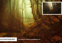 Autumn Sunlight Lightroom Preset
