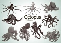 20 Octopus PS Bürsten abr.vol.3