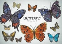 20 Butterfly PS Penselen abr.Vol.7