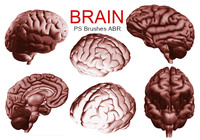 20 Brain PS Brushes ABR.Vol.5