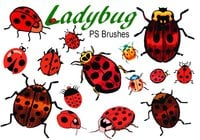 20 Ladybug PS Brushes abr.Vol.1
