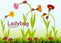Ladybug Brushes