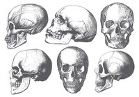 Collection de brosses de crâne