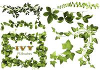 20 Ivy PS Brushes abr vol.2