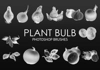 Free Plant Bulb Photoshop Brushes