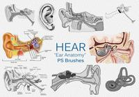 "20 Hoor ""Ear Anatomy"" PS Brushes.abr vol.2"
