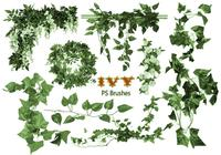20 pinceles ivy ps abr vol.1