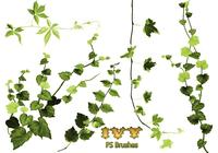 20 Ivy PS Brushes abr vol.4