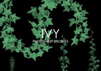 Ivy Photoshop brosses