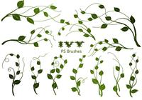 20 Ivy PS Brushes abr vol.6