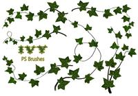20 Ivy PS Brushes abr vol.8