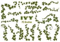 20 Ivy PS Brushes abr vol.9