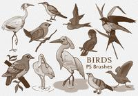 20 Birds PS Brushes.abr vol.1