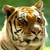 Tiger_1280x1024