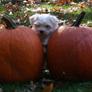 2_pumpkins.jpg