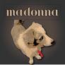 Madonnalogo