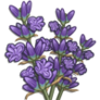 Flower_lavender_icon