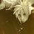 Cloud_avatar