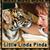 Linda_tiger_95_x_95_